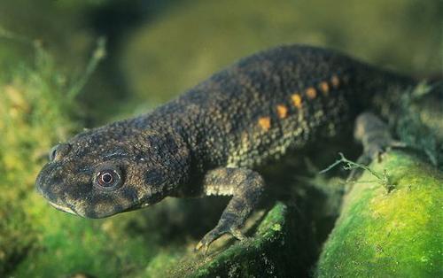 15 Facts About Amphibians