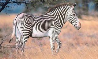 alt= top 10 endangered african wildlife