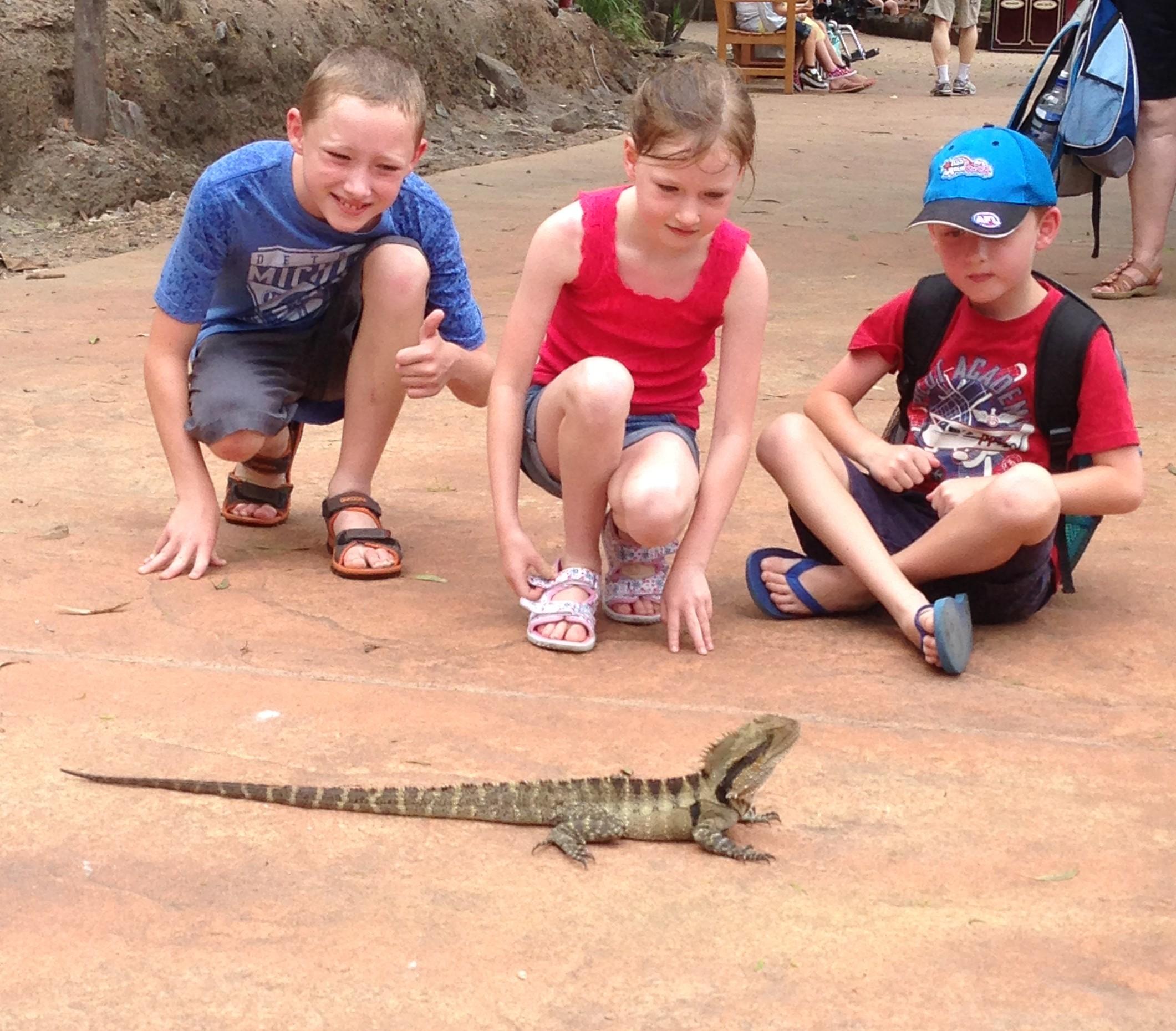 Australian Water Dragon: 5 Interesting Facts About Australian Water Dragons