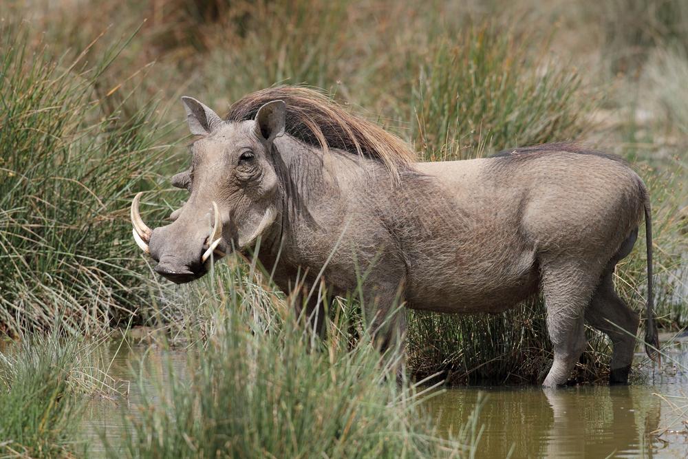Estos son los 10 animales más feos del mundo - Altavoz