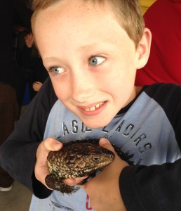 This is me holding a shingleback