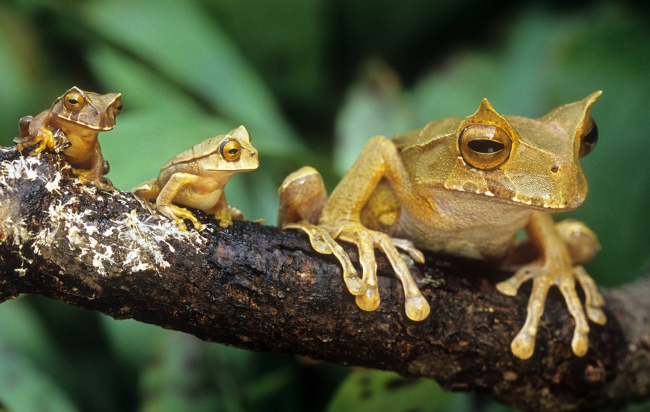 5 Interesting Facts About Horned Marsupial Frogs Hayden