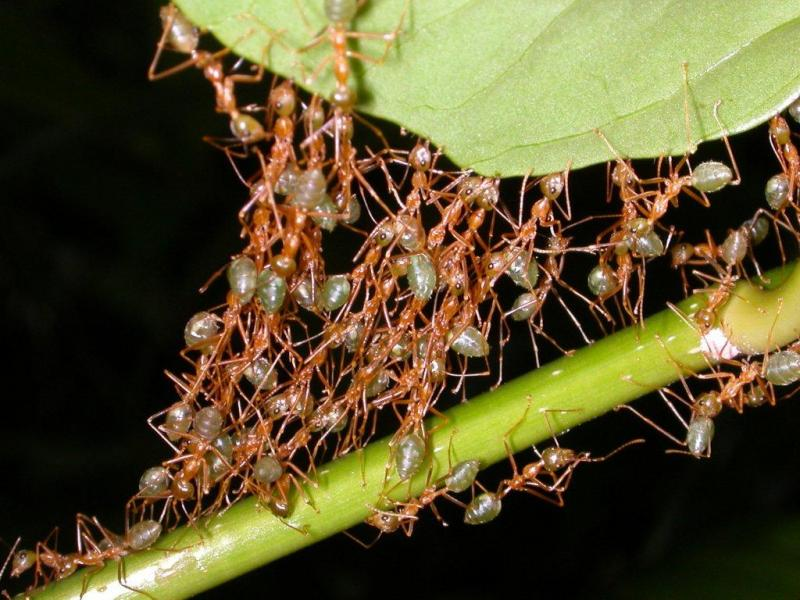 how to build an ant nest leead