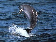 Curious question cool facts about sperm whales can not recollect